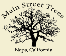 MainStreetTrees's logo