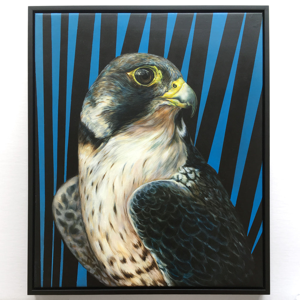Hawk by John Appleton