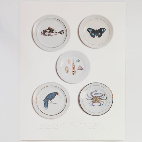 Creatures collected by Tabatha Forbes