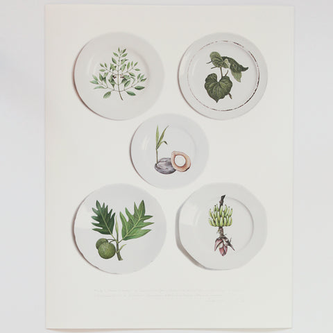 Plants collected by Tabatha Forbes