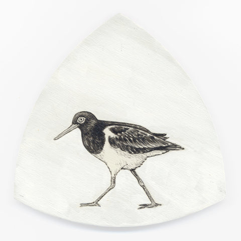 Variable oystercatcher Torea-pango by Tabatha Forbes