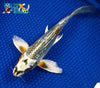 "8.5"" GINRIN BENI GINGA BUTTERFLY - Koi To The World - 2"