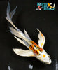 "6.5"" DOITSU KUJAKU BUTTERFLY - Koi To The World - 5"
