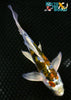 "6.5"" KIN KIKOKURYU BUTTERFLY - Koi To The World - 4"