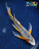 "8"" ASAGI BUTTERFLY - Koi To The World - 5"