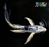"6.75"" DOITSU SHIRO BEKKO BUTTERFLY - Koi To The World - 5"