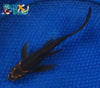 "6.5"" KARASU BUTTERFLY - Koi To The World - 2"