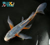 "7.75"" ASAGI BUTTERFLY - Koi To The World - 4"