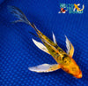 "7"" DOITSU KI BEKKO BUTTERFLY - Koi To The World - 5"