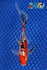 "6.5"" SANKE GOLD SHUBUNKIN - Koi To The World - 1"