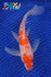 "8"" GINRIN KOHAKU BUTTERFLY - Koi To The World - 1"