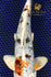 products/DSC_0147_-_Copy_a6132dc1-bed6-4ef4-bf1c-e7ab38e41119.jpg