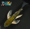"6.25"" GINRIN OCHIBA SHIGURE BUTTERFLY - Koi To The World - 3"
