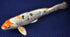 products/DSC_0167_dcb40714-f379-4a0f-b55a-4d11e2f7e5cd.jpg