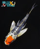 "6.25"" DOITSU KUJAKU BUTTERFLY - Koi To The World - 5"