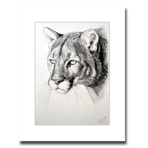 COUGAR PORTRAIT (pencil)