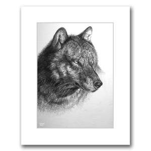BLACK/GREY WOLF PORTRAIT