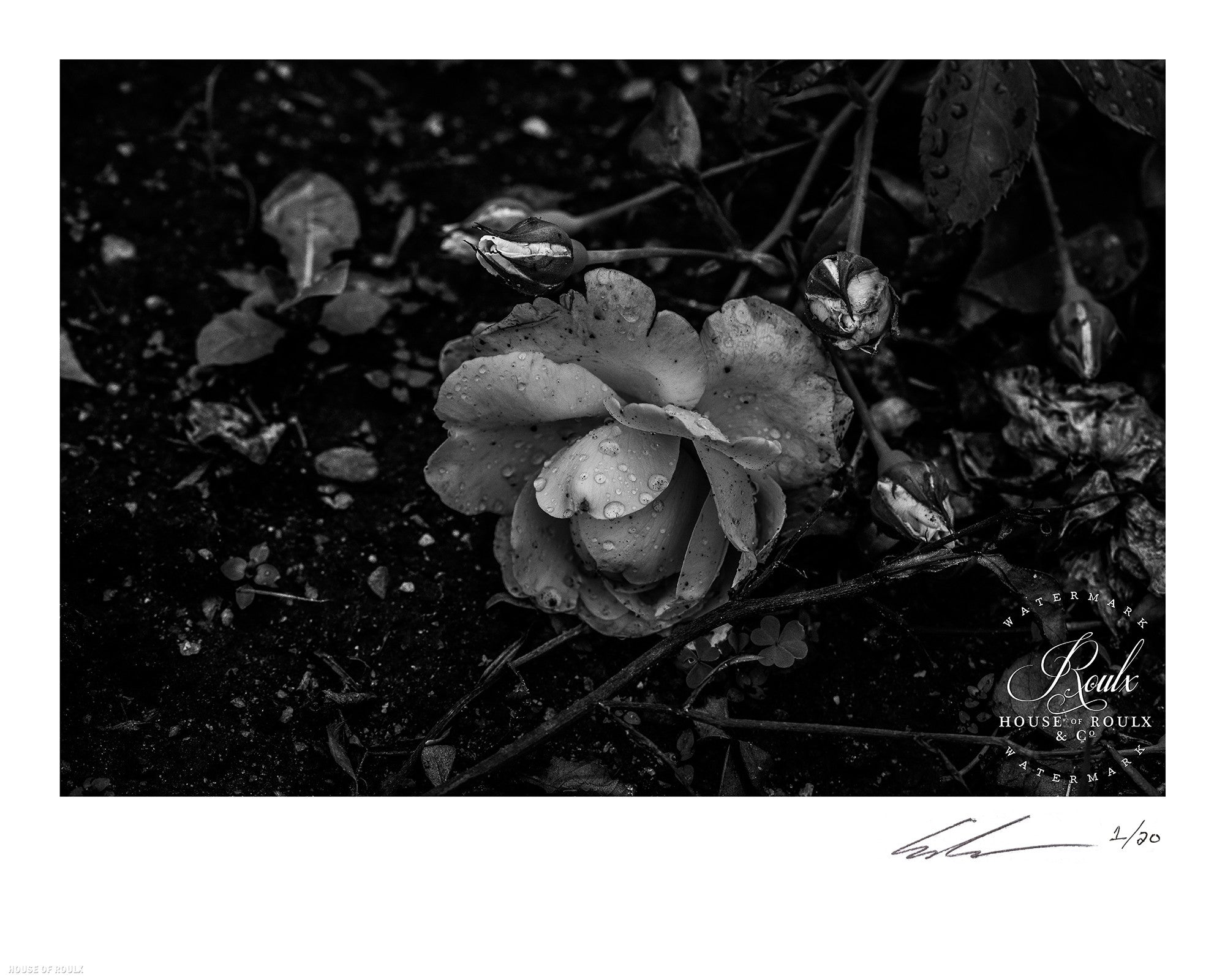 flower by june of 87 limited edition archival print 16 x 20 rh houseofroulx com 16x20 tiny house 16 x 20 house