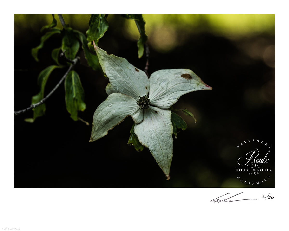"June of 87 ""Flower"" - Limited Edition, Archival Print - 16 x 20"""