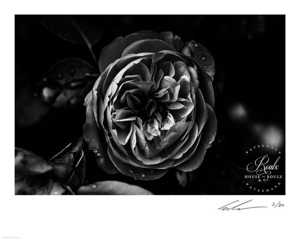 """Flower"" by June of 87 - Limited Edition, Archival Print - 16 x 20"""