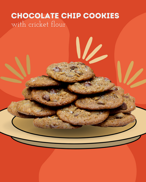 Chocolate chip cookies with cricket flour