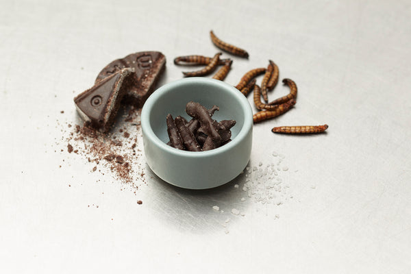 Chocolate Covered Bugitos