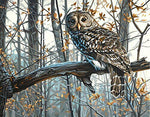 "DIY Painting By Numbers -Owl (16""x20"" / 40x50cm)"