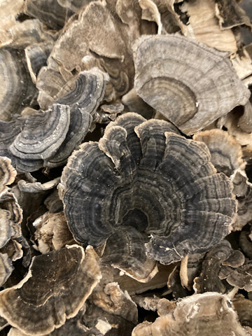 Dried Organic Turkey Tail Mushrooms