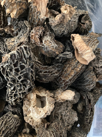 Dried USA No. 2 Morel (bulk)