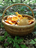 Gold Chanterelles – Mid-June to December