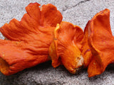 Lobster Mushrooms</h1><br>August-December