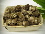 Morel Mushrooms</h1><br>March-early August
