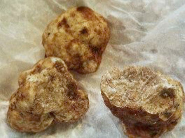 Oregon White Truffles</h1><br>November-February