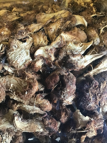 Dried Organic USA Pom Pom (Lion's Mane) Mushrooms