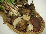 Porcini Mushrooms</h1><br>Sept-Nov; April-May