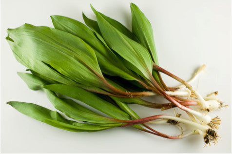 Ramps (Wild Leeks)</h1><br>April-May