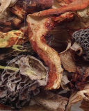 Woodland Blend: <br>Morel, Porcini, Lobster, Oyster, Chanterelle