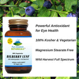 Bilberry Capsules - Full Spectrum Extract - 60 Kosher Veggie Caps