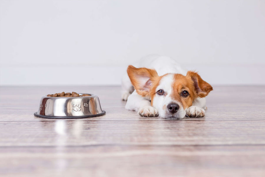 Are Supplements Important, and Does Your Pet Need Them?