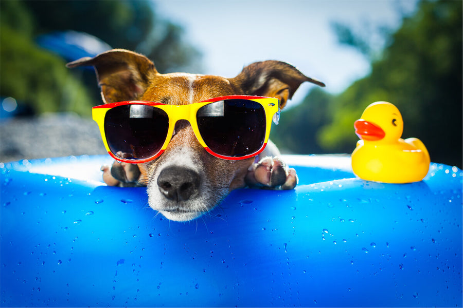 5 Healthy Treats to Keep Your Dog Cool This Summer