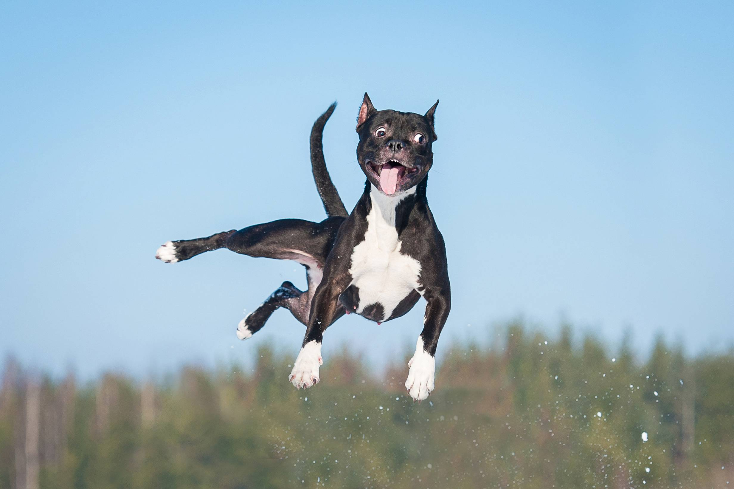 Senior Probiotic Bites™- dog jumping in air