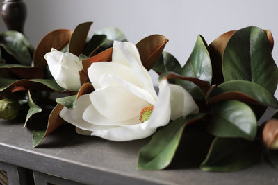 Bloom of the Week: Magnolias