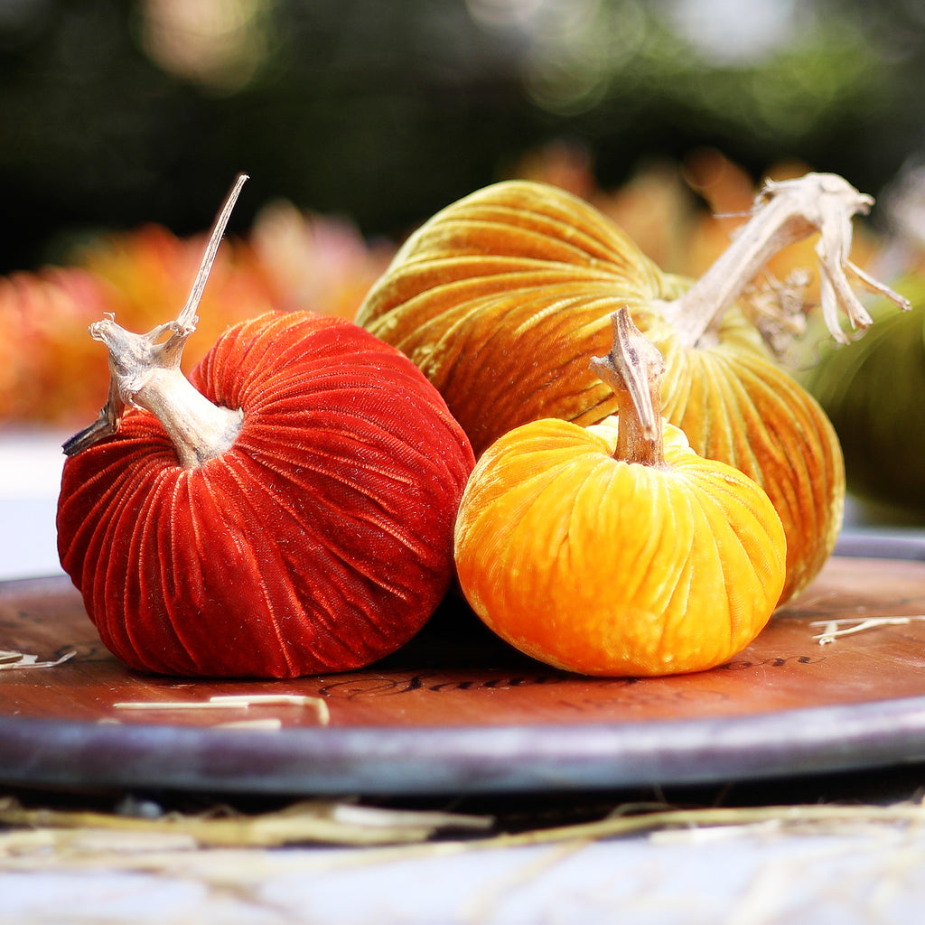 Plush Pumpkin Luxury Velvet Real Stem Pumpkin Fall Decor - Set of 3 Traditional Harvest