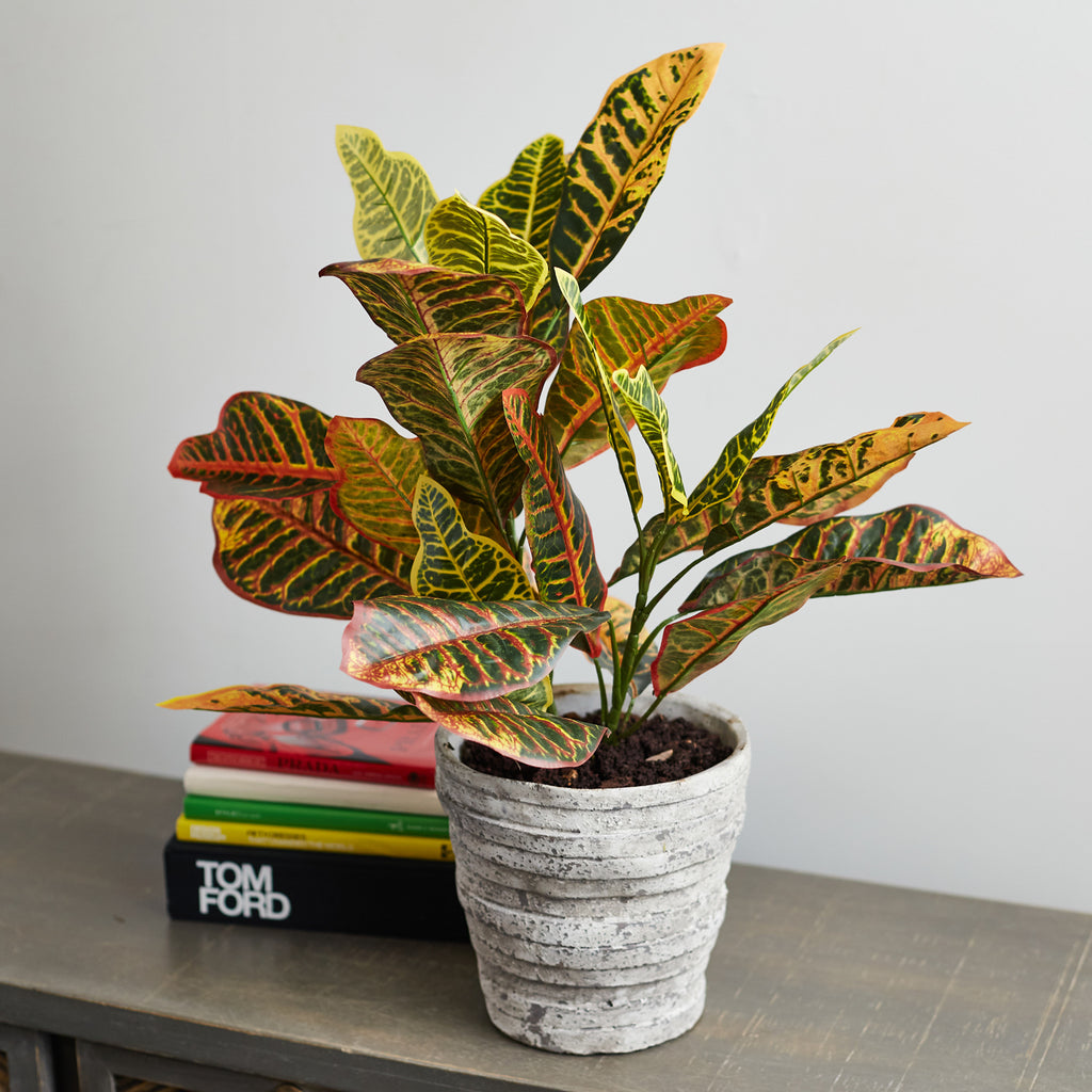 Faux Croton Houseplant in Textured Stoneware Pot