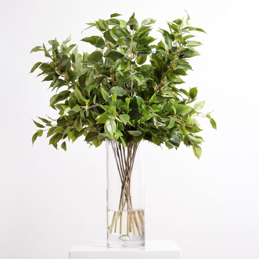 Large Green Ficus Tree Leaves Everyday Arrangement in Tall Glass Vase