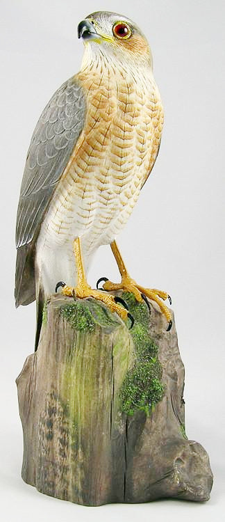 Sharp-Shinned Hawk (Adult) - Hand Carved Birds