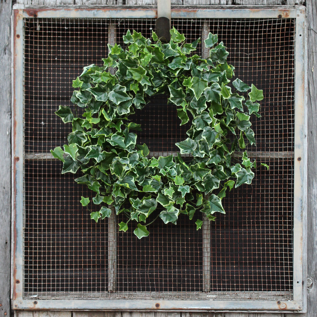Green Variegated English Ivy Everyday All Seasons Front Door Wreath