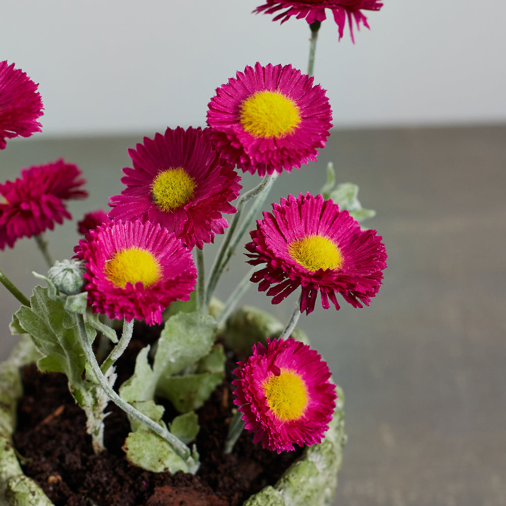 Small Magenta Flowering Daisy Faux Houseplant in Cactus Pot