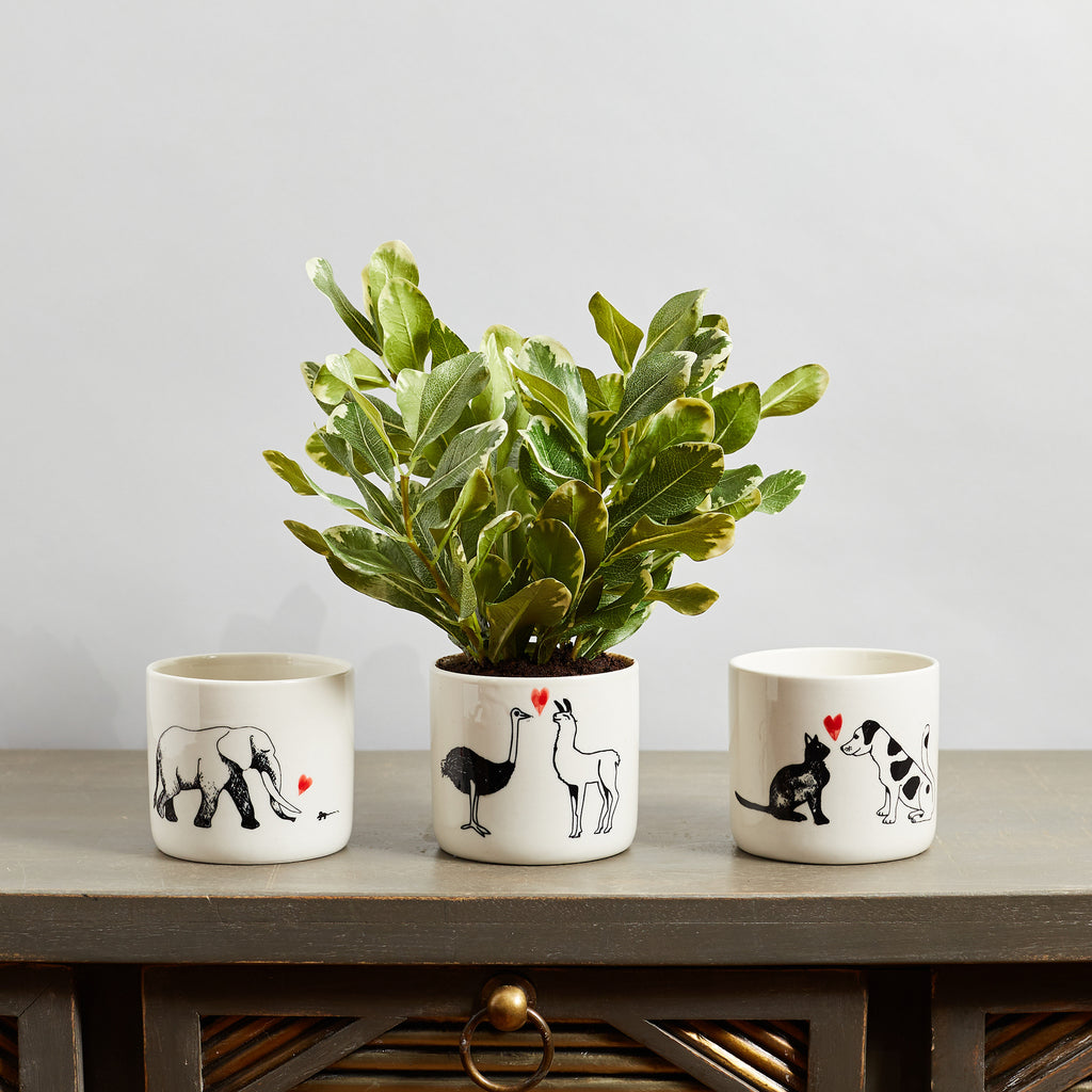 Small Variegated Japanese Pittosporum Faux Houseplant in Ceramic Animal Pot