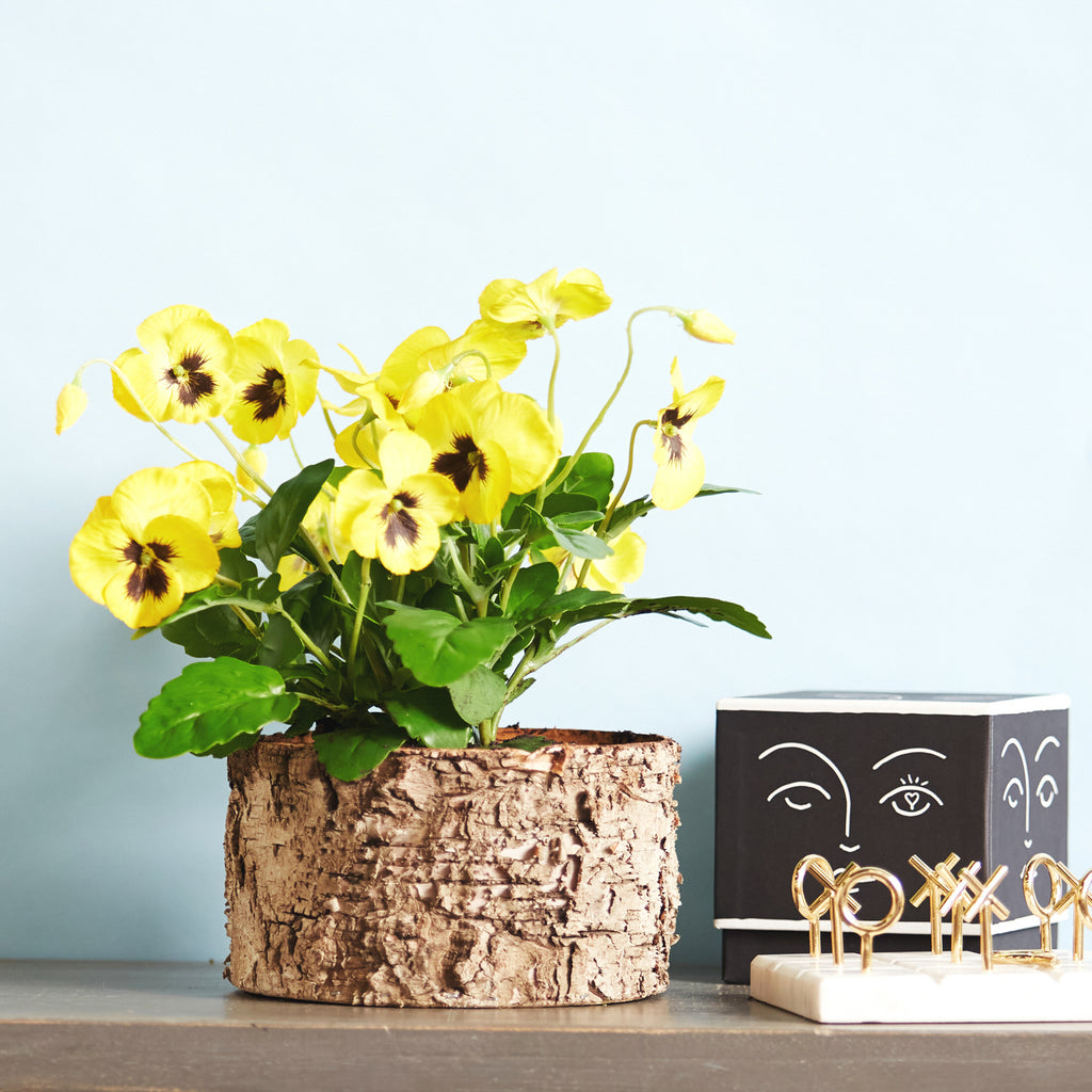 Yellow Pansy Faux Plant Arrangement in Birch Planter